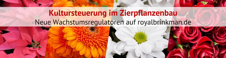 Wachstumsregulatoren im Zierpflanzenbau