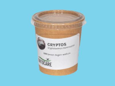 Cryptolaeumus [100 Nymphen]