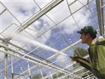 Tipps für die Anwendung von Glasreinigern im Gewächshaus